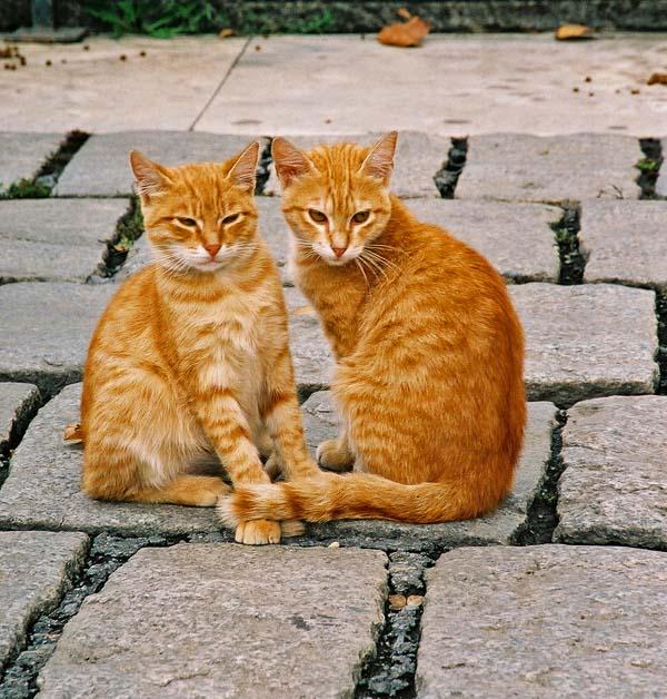 Картинки с надписями прикольные рыжие коты, днем