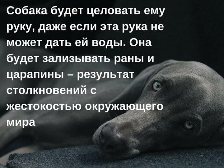это картинки цитаты про собак участковая
