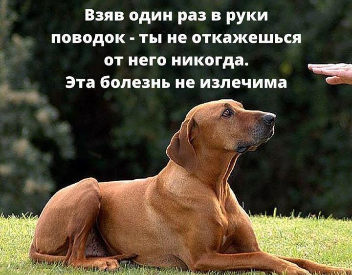 говорят, картинки про собаки со смыслом растения