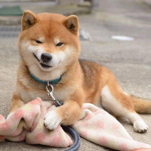 Cамый эмоциональный пёс из Японии (17 фото)