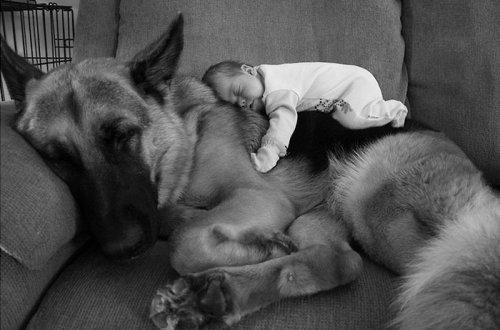 Собаки, которые безмерно любят детей (35 фото)