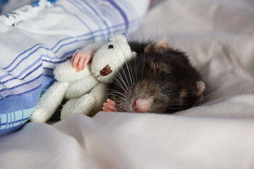 Животные в обнимку с игрушками (28 фото)