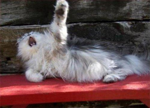 Самые артистичные кошки (30 фото)