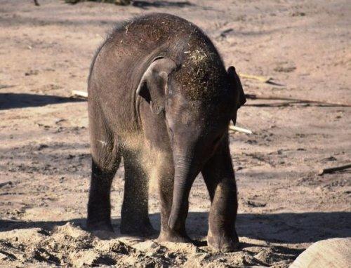 Очаровательные слоники (25 фото)