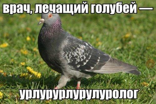 Забавные зверушки (30 фото)