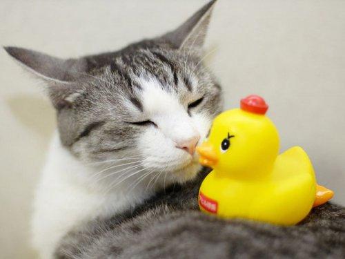 Любят ли кошки проводить время с людьми?