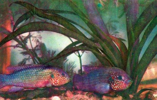 Рыбки аквариума (20 фото)