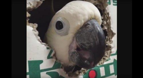 Юмор :Смешные птицы