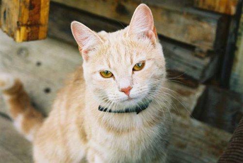 Милые и забавные кошки (45 фото)