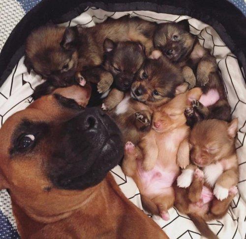 Собака- зеркало души хозяина! (40 фото)