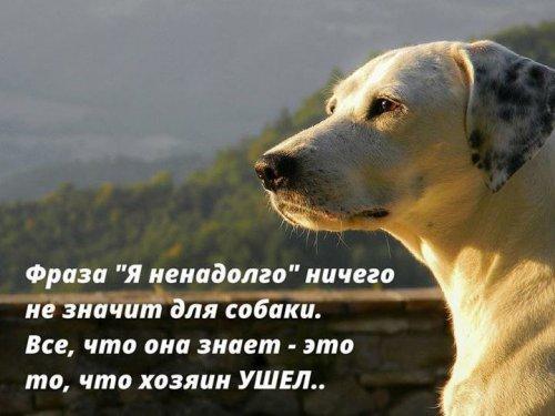 Вся правда о собаках! (22 фото)