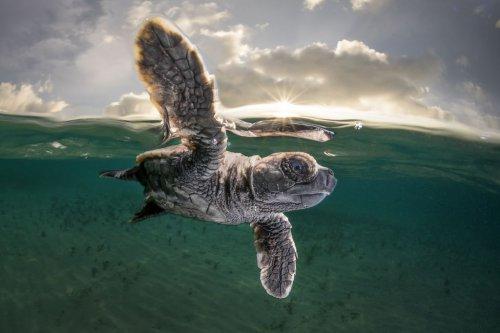 Подборка лучших фотографий из мира животных, опубликованных журналом National Geographic в марте 2017 года (12 фото)