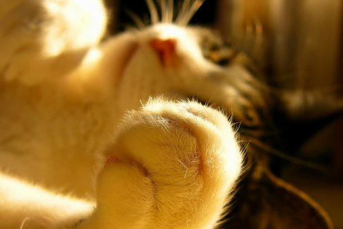 Котики муркотики:) (35 фото)