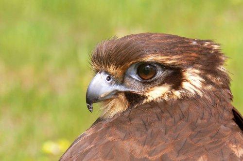 Красивые фотографии птиц от профессиональнх фотографов (55 фото)