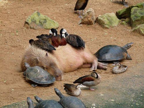 Юмор : Фото+гифки дерзких животных, которым всё «до лампочки»