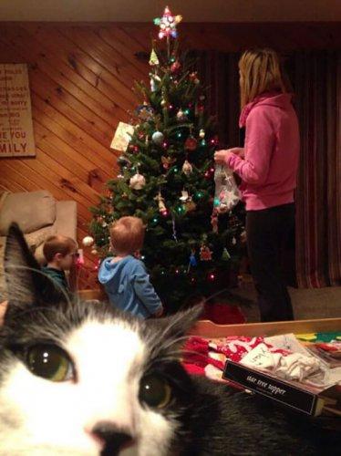 Юмор : Как наглые коты портят хороший кадр (21 фото)