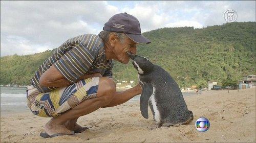 Дружба между дедушкой и пингвином