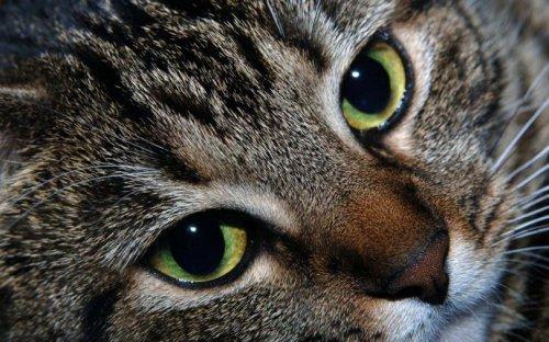 Что лечат и диагностируют кошки (4 фото)