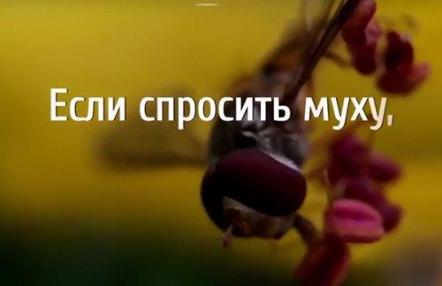 О пчеле, мухе, луге и помойной яме