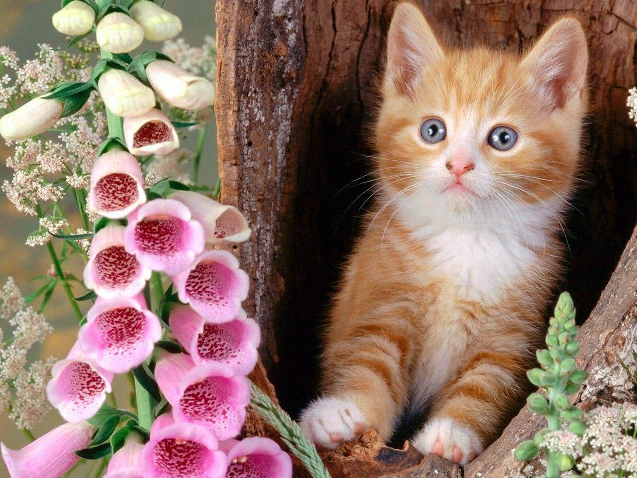 Фотки на телефон кошки