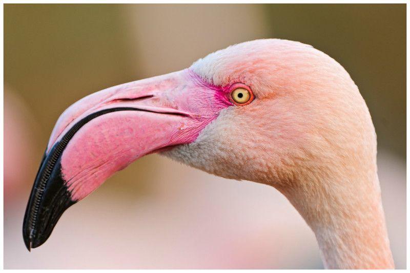 Клювы птиц картинки