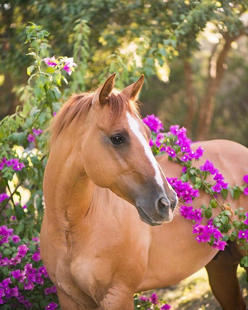 Картинки с красивыми лошадьми с большими кривыми