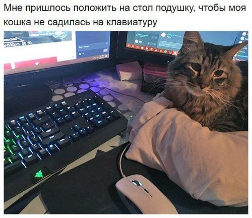 Юмор : Животные,которые ни на минуту не хотят оставлять своего хозяина (12 фото)