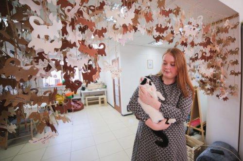 Кошка из Нижнего Новгорода проводит мастер-классы по котойоге (6 фото)