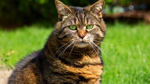 К чему могут привести объятия с котами? (8 фото)