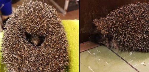 """Это интересно : Хозяин заметил, что его пес играет с """"комком грязи"""". Но это оказалось живое существо (3 фото)"""