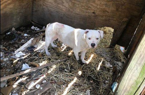 Собака отгрызла себе лапу, чтобы сбежать из пятилетнего плена