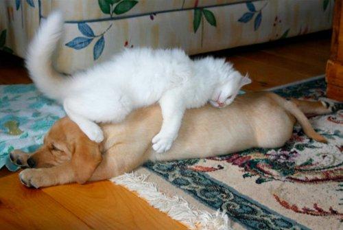 Спящие кисули (30 фото)