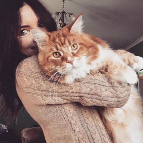 """""""Самый длинный в мире кот"""" хочет, чтобы его оставили в покое (8 фото)"""