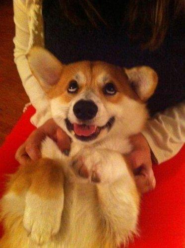 Милые и забавные собачки (35 фото)