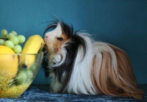 Забавныме морские свинки (23 фото)