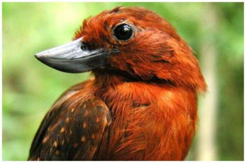 Необычные клювы птиц (16 фото)