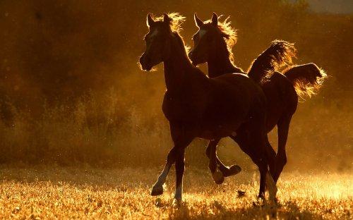 Изумительные фотографии лошадей (45 фото)