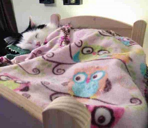 Спасённая кошка спит как человек в крошечной кроватке (4 фото)