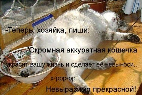 Кошачий позитив (30 фото)