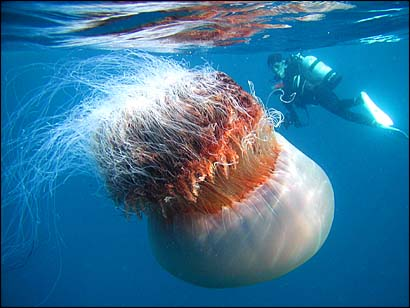 Красивые медузы (16 фото)