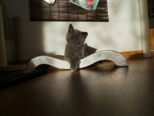 Теплолюбивые кошки:) (36 фото)