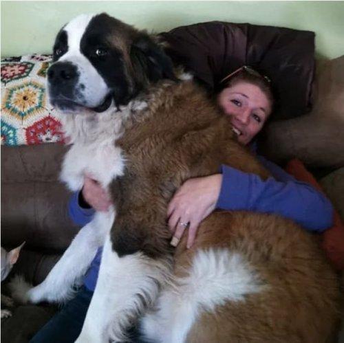 Очаровательные большие собаки (22 фото)