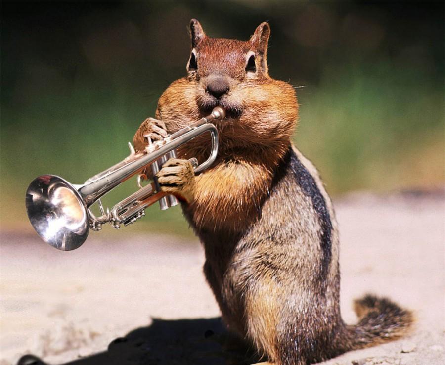 Смешные картинки с трубами