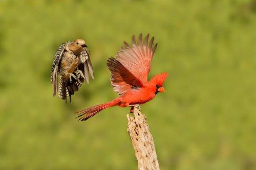 Просто красивые птицы (18 фото)
