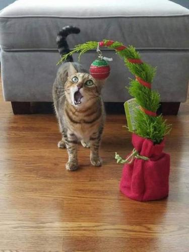 Коты-чертовски весёлые ребята:) (30 фото)