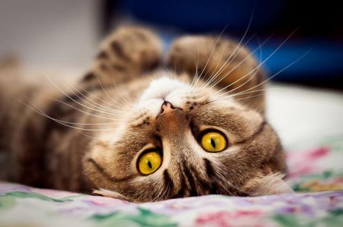 Без кота,и жизнь не та:) (40 фото)