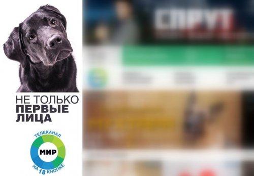 Юмор : Собака вылезла из-под стола прямо во время прямого эфира российских новостей и стала звездой интернета