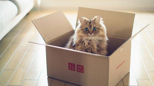 5 причин, почему кошки так сильно любят коробки