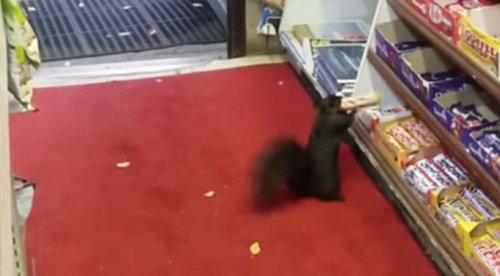 Юмор : Владелец магазина узнал, кто грабил его на протяжении 5 лет (3 фото)