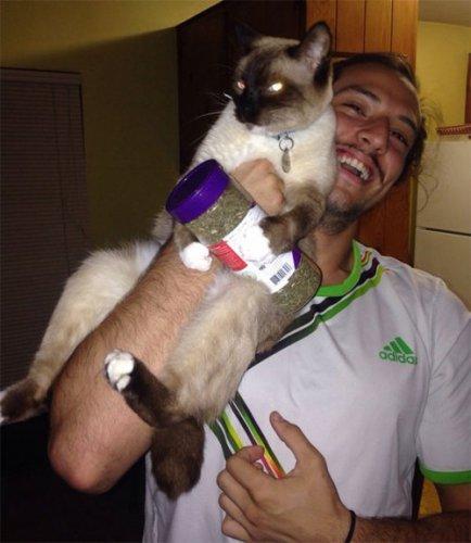 Смешные кошки,перебравшие кошачьей мяты (25 фото)